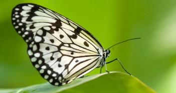 hình nền loài bướm lung linh đẹp nhất