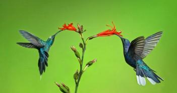 hình ảnh loài chim đẹp thế giới