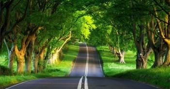 ảnh nền con đường đẹp nhất