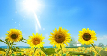 xem ảnh cánh đồng hoa hướng dương