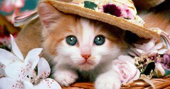 xem ảnh những chú mèo đẹp