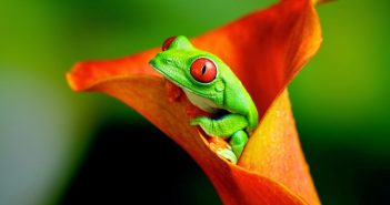 tải wallpaper ếch