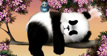 Tải hình đẹp gấu trúc panda