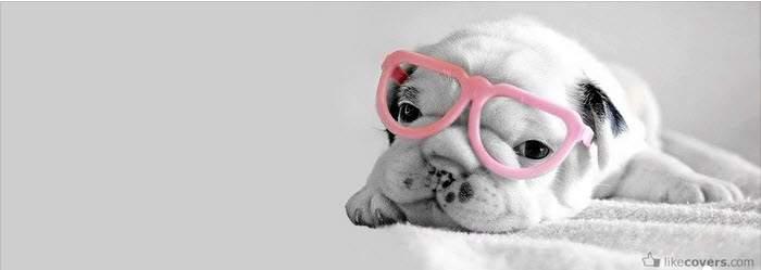 79 ảnh bìa facebook dễ thương cute đáng yêu nhất