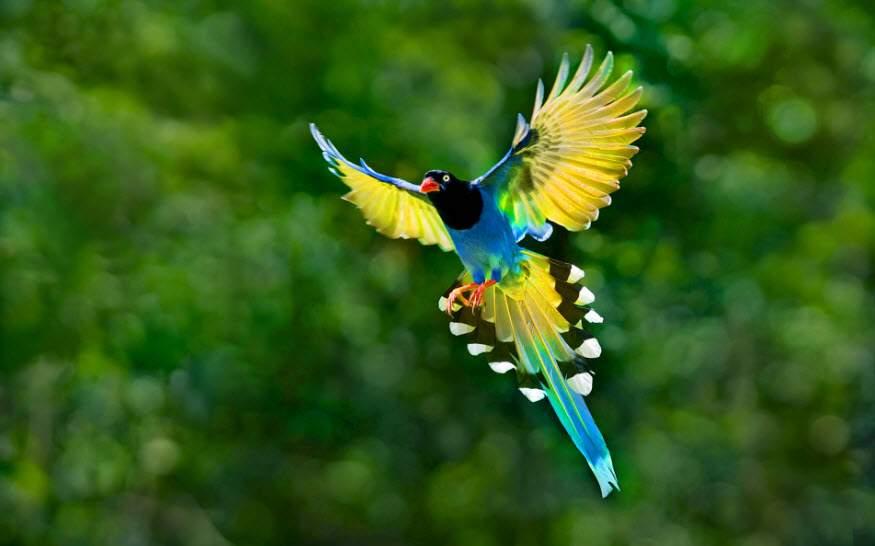 99 hình ảnh thiên nhiên phong cảnh đẹp nhất Thế Giới