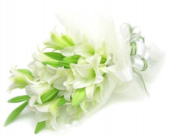 hoa-lily-tang-thay-co (1)