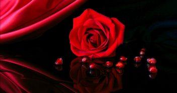 Hình ảnh hoa hồng tình yêu đẹp nhất
