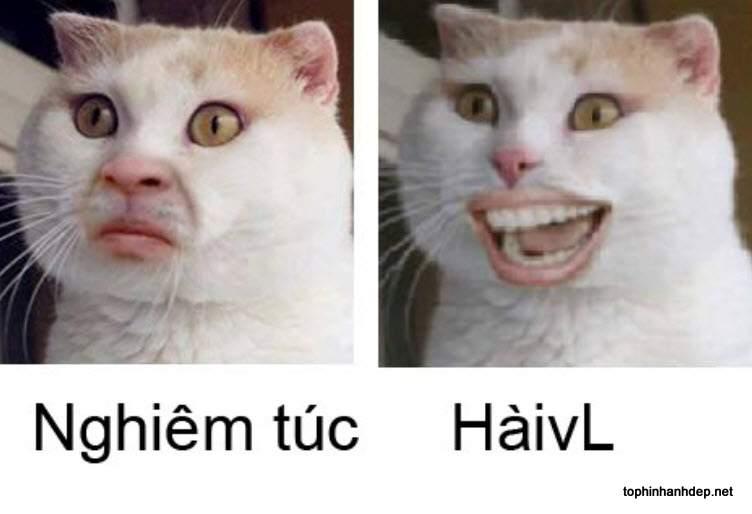 hinh-anh-meo-hai-huoc (8)