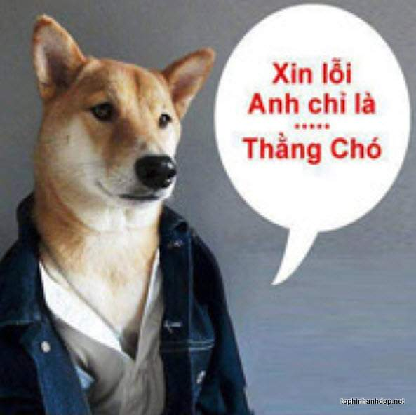 hinh-anh-nhung-chu-cho-hai-huoc (7)