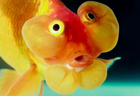 Tải 10 hình nền động cá bơi cực đẹp cho điện thoại