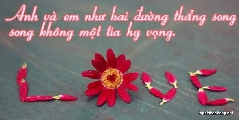 nhung-cau-noi-hay-ve-tinh-yeu-don-phuong (14)