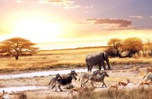 Tải ảnh động vật hoang dã đẹp