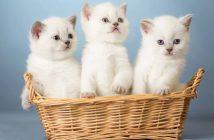 Hình ảnh mèo con dễ thương