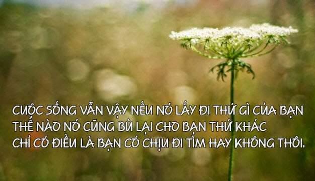 stt-hay-ve-cuoc-song (3)