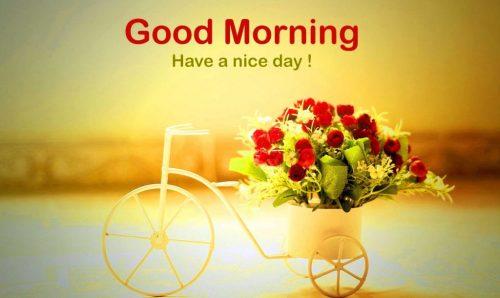 101 Hình ảnh chào buổi sáng chào ngày mới Good Morning đẹp