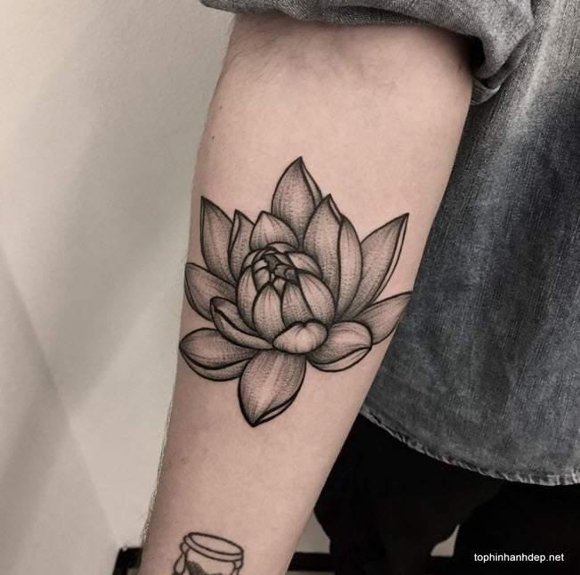 A Bloom Of Manly Design Ideas: 38 Hình Xăm Hoa Sen đẹp Nhất Và ý Nghĩa Của Tattoo Hoa Sen