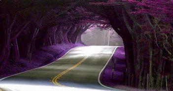 Hình ảnh con đường đẹp nhất thế giới